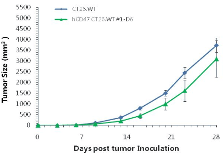 B-hCD47-CT26WT-Cell-Line-details-tumor-growth-curve